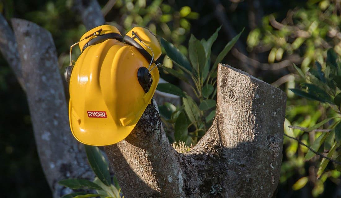 Élaguer un arbre : tout ce que vous devez savoir