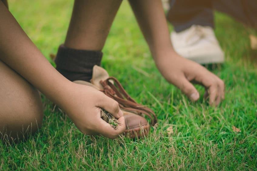 technique pour desherber à la main une pelouse