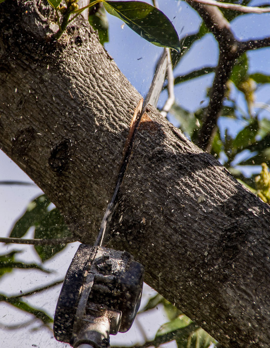 tronçonneuse pour elaguer arbre