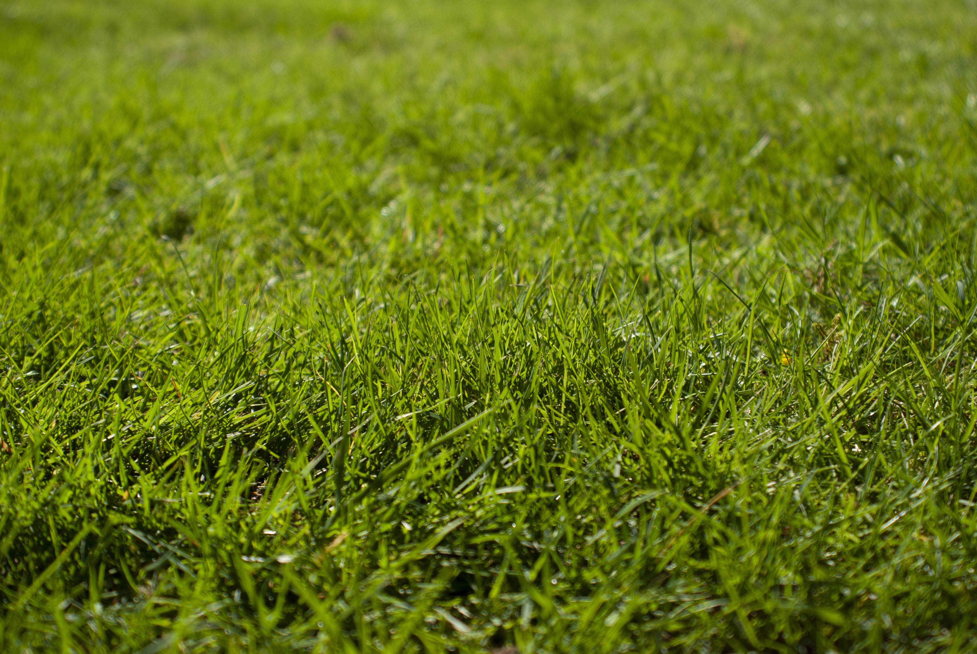 type de pelouse